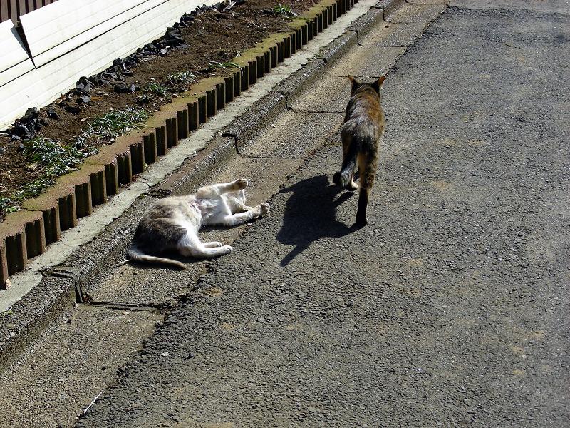 猫路地の猫たち5