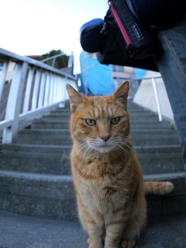 階段で座ってる茶トラ猫2