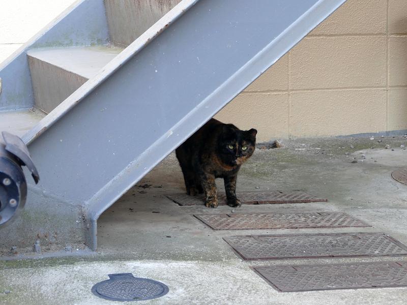 階段下のサビ柄猫1