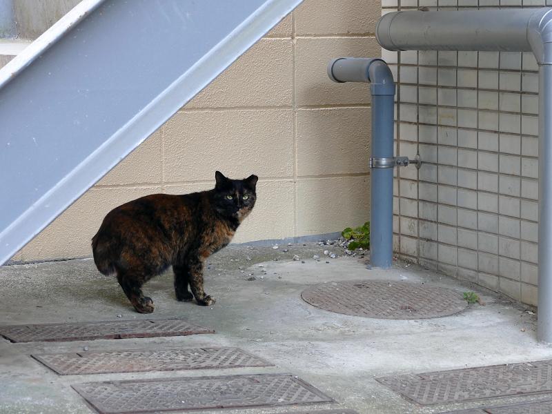階段下のサビ柄猫2
