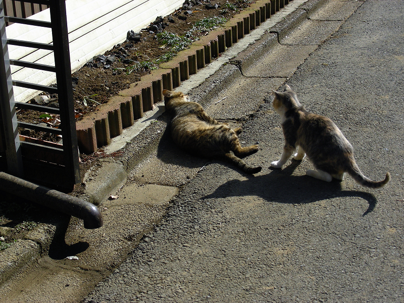 路地で遊ぶ猫たち1