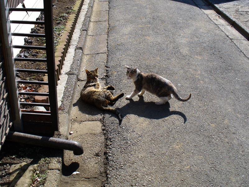 路地で遊ぶ猫たち2