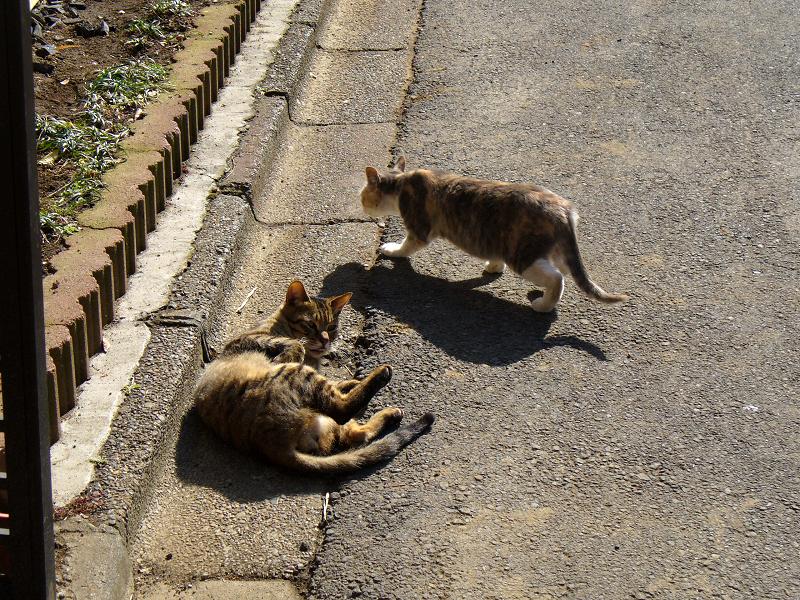 路地で遊ぶ猫たち3