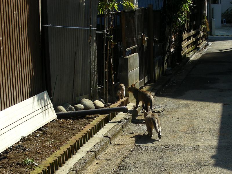 路地で遊ぶ猫たち4