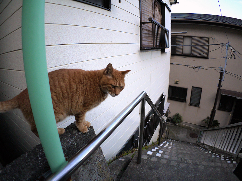 階段手すりと茶トラ猫1