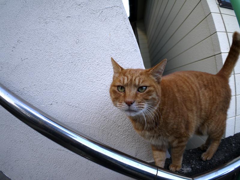 階段手すりと茶トラ猫2