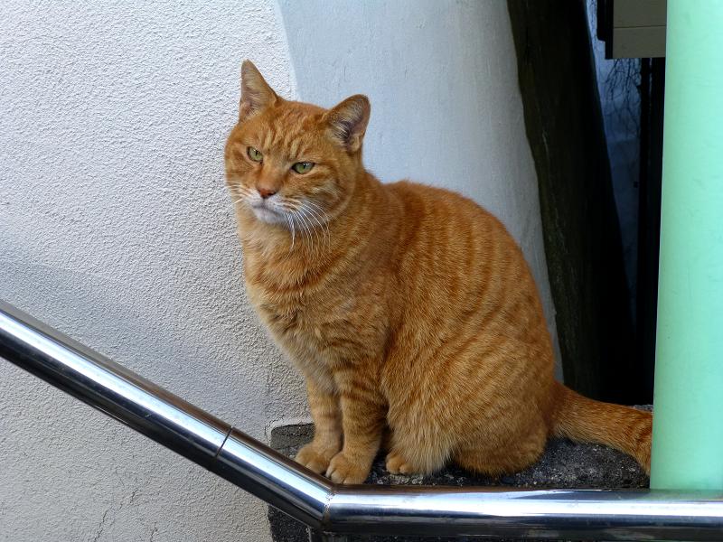 階段手すりと茶トラ猫3