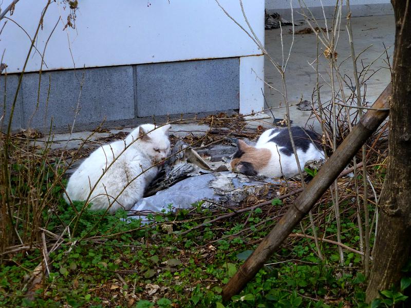 半分目覚めた空き地の猫1