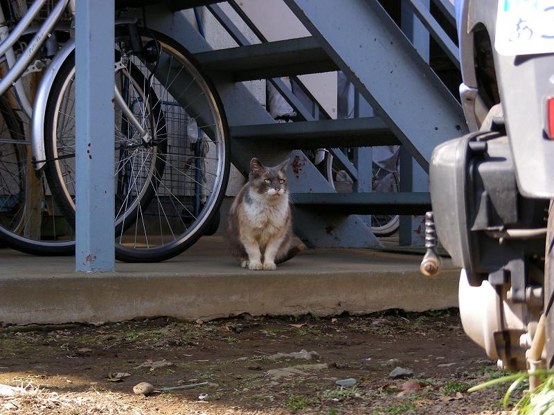 アパート前の猫たち1