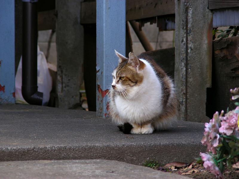 アパート前の猫たち2