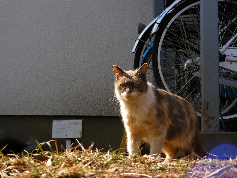アパートから出てきた猫1