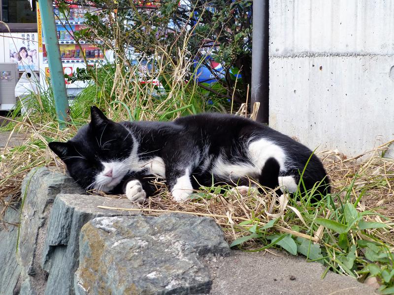 お気に入りの場所で寝ている黒白猫1