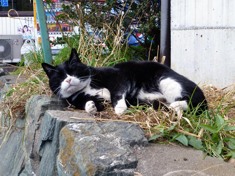 お気に入りの場所で寝ている黒白猫2