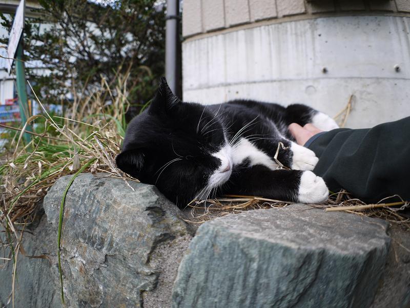 お気に入りの場所で寝ている黒白猫3