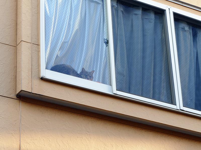 窓際の猫1