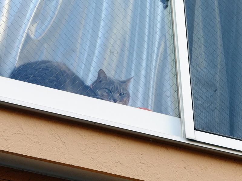 窓際の猫2