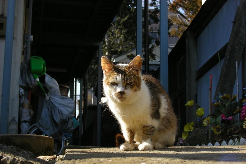 アパート廊下の猫1