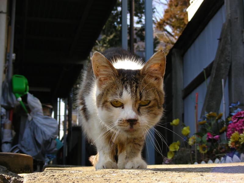 アパート廊下の猫2