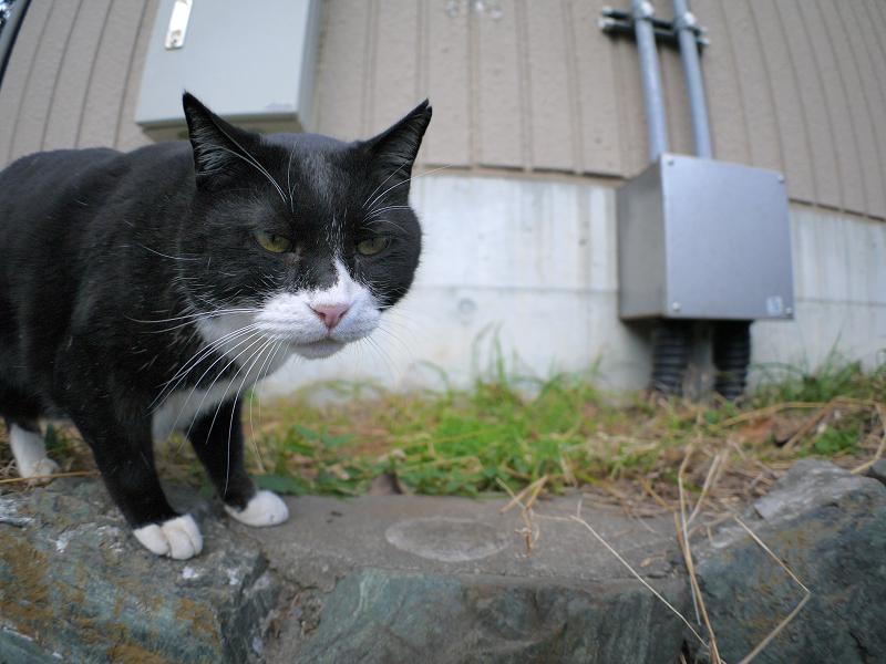 幸福の黒白猫1