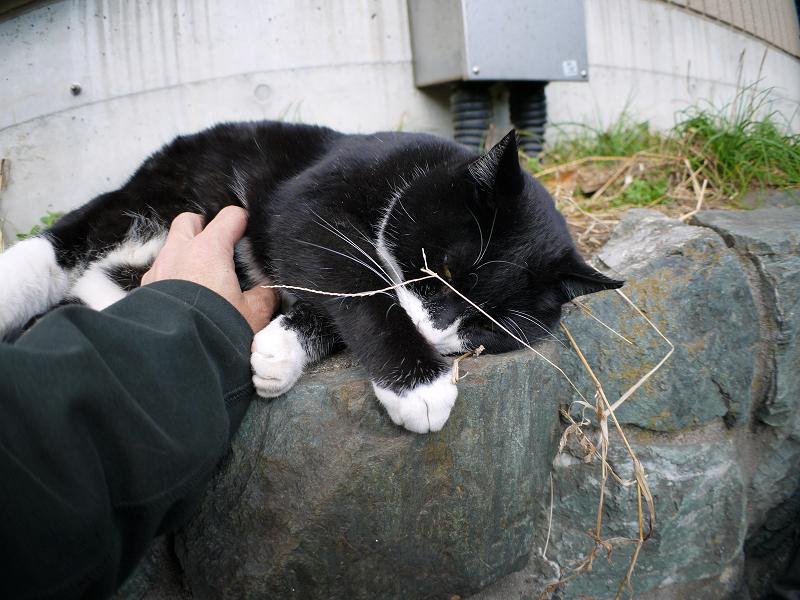 幸福の黒白猫2