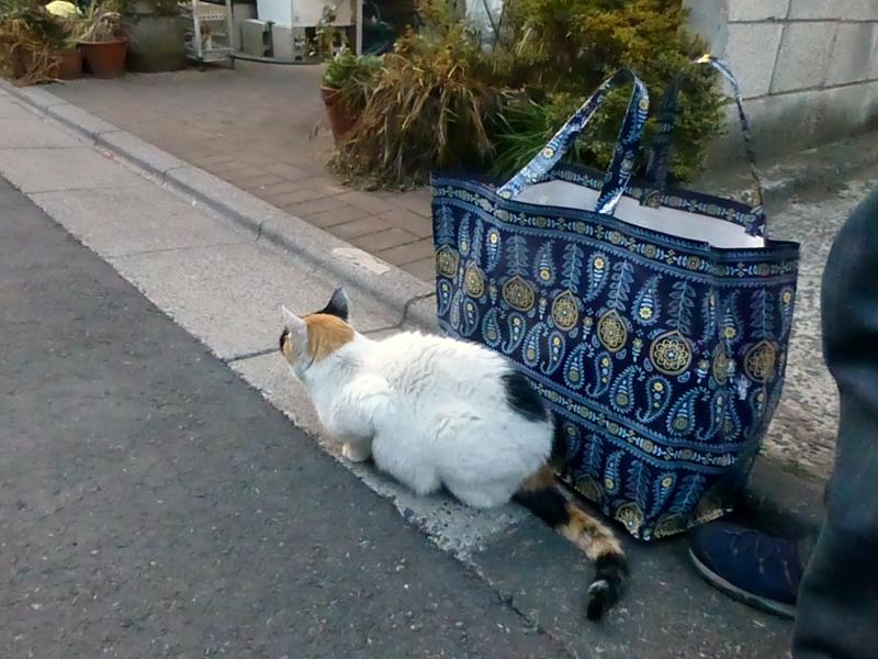 夕暮れ猫路地の猫たち1