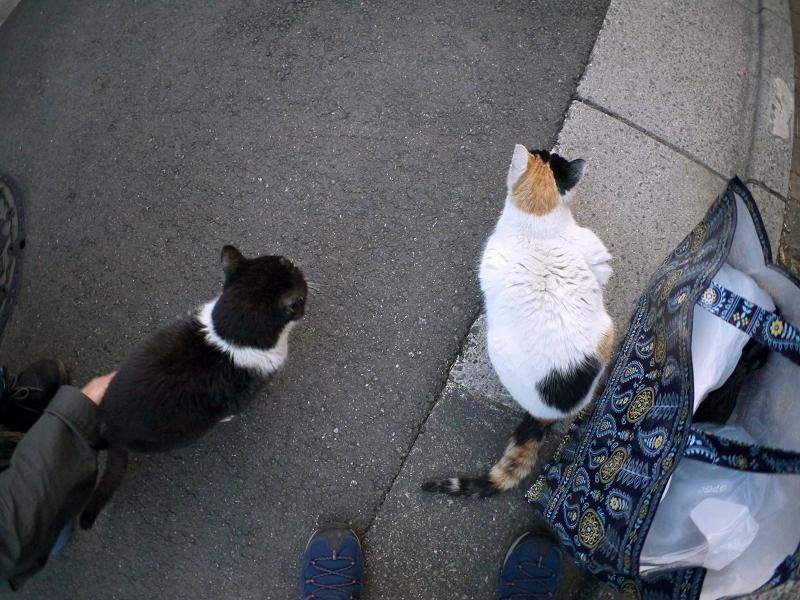 夕暮れ猫路地の猫たち2
