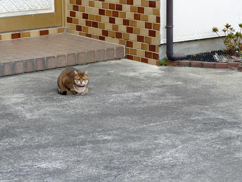 玄関前の小さな猫1