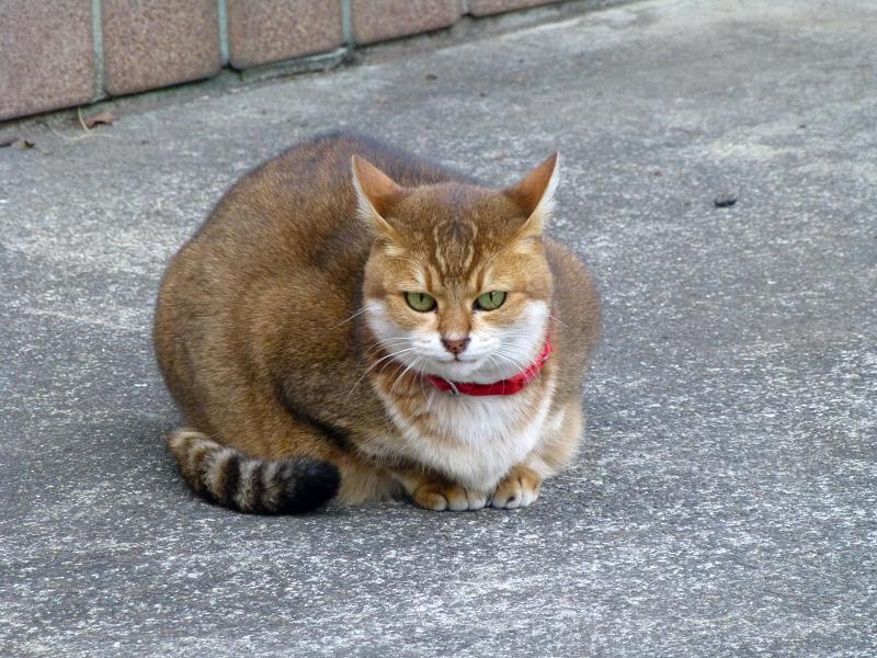 玄関前の小さな猫2