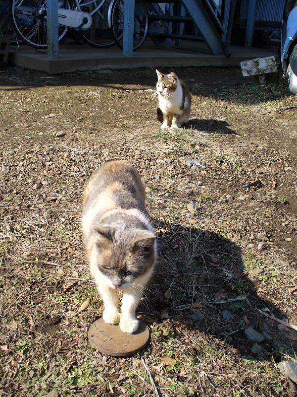 アパートから敷地に出てきた猫たち1