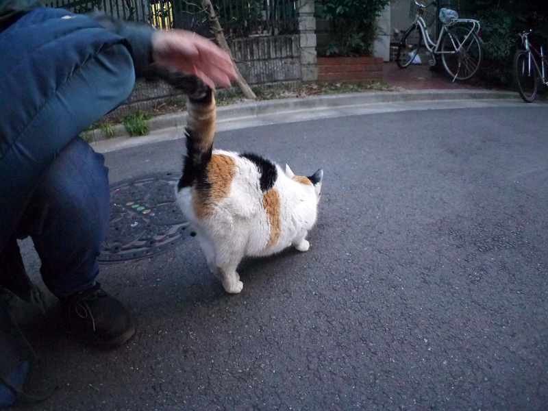 猫路地の三毛猫1