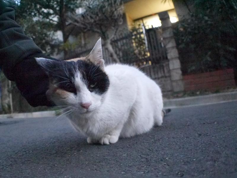 猫路地の三毛猫2