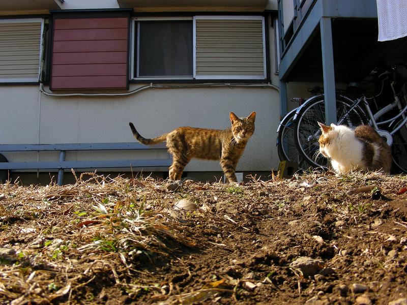 アパート前に猫たち1