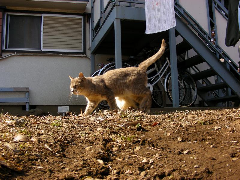 アパート前に猫たち2