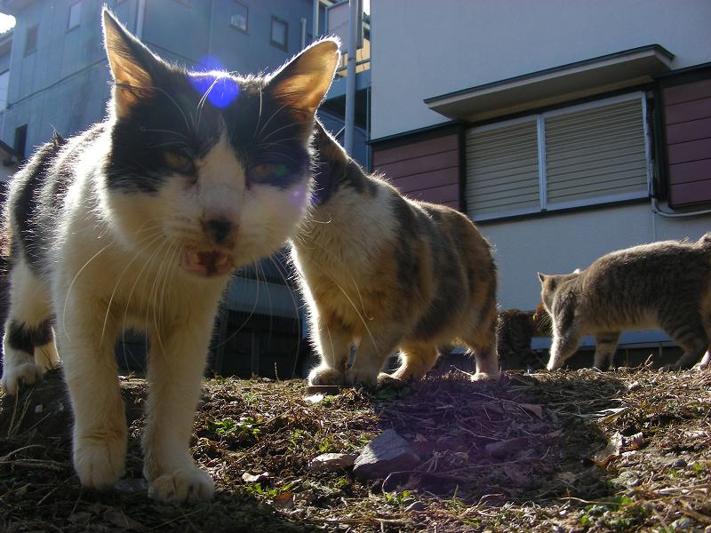 アパート前に猫たち3
