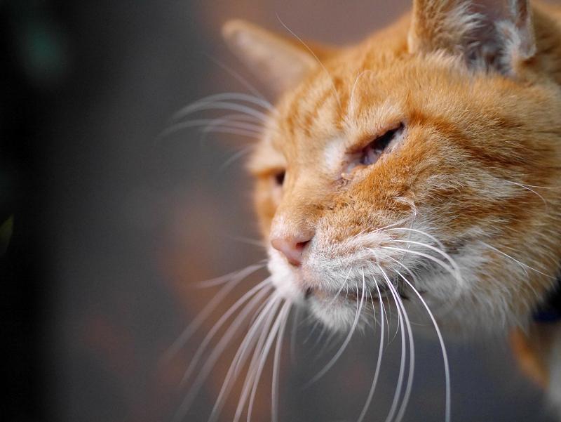 最後に会う茶白猫2