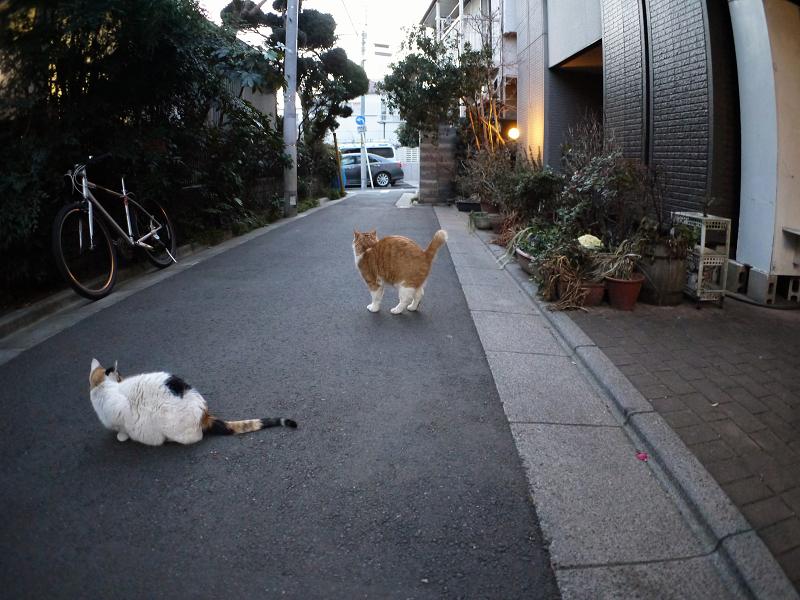 猫路地聖地の猫たち1