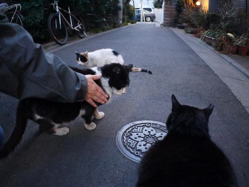 猫路地聖地の猫たち2