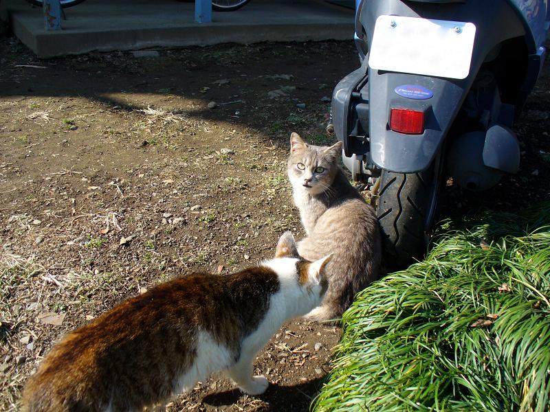 アパート駐車場の猫たち2