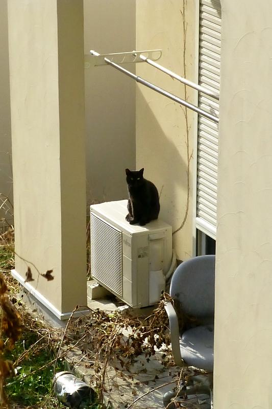 民家室外機の黒猫1