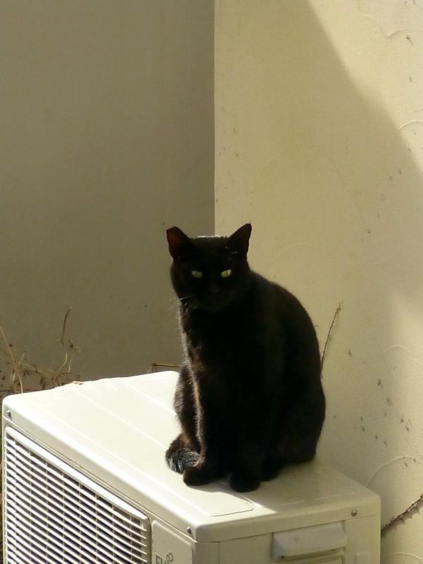 民家室外機の黒猫2