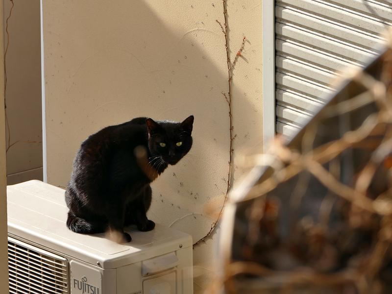 民家室外機の黒猫3