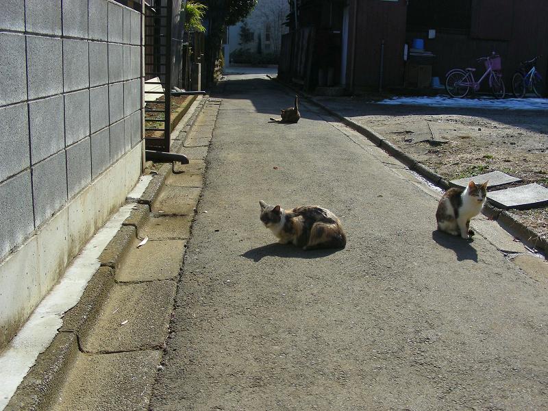 陽だまり路地の猫たち1