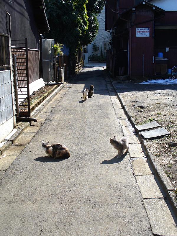 陽だまり路地の猫たち2