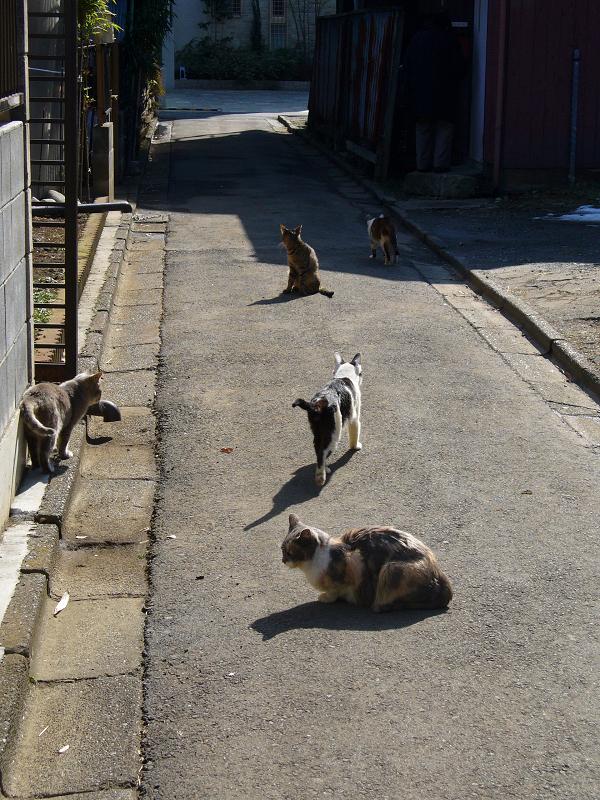 陽だまり路地の猫たち3