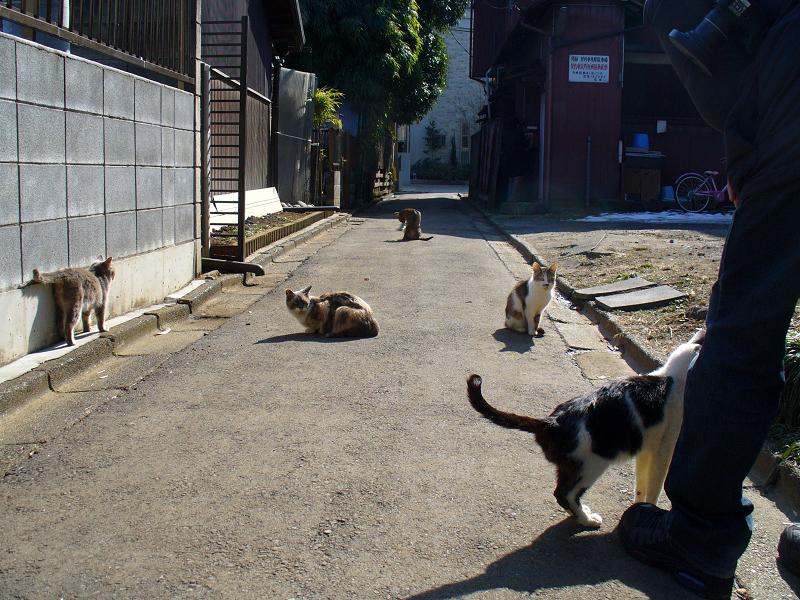 陽だまり路地の猫たち4