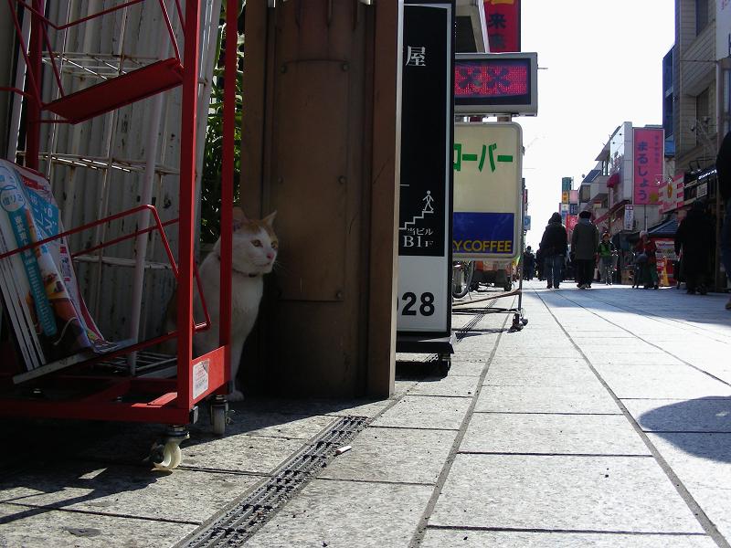 商店街の白茶猫1