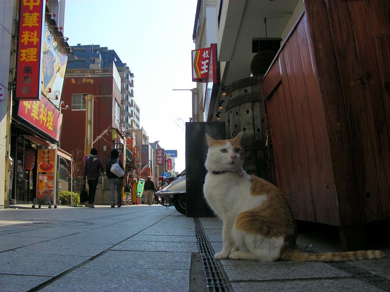 飲み屋街と白茶猫1