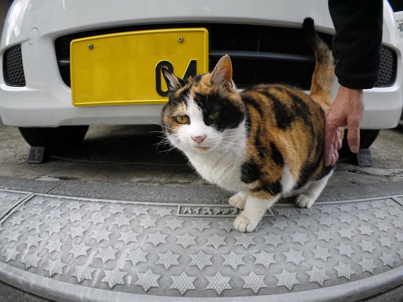 ガレージと三毛猫3