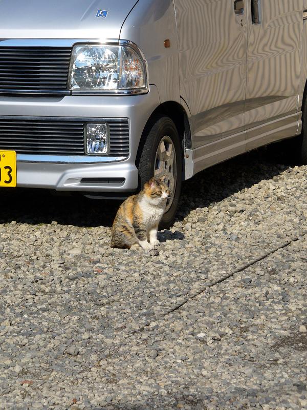 青空駐車場と三毛猫1