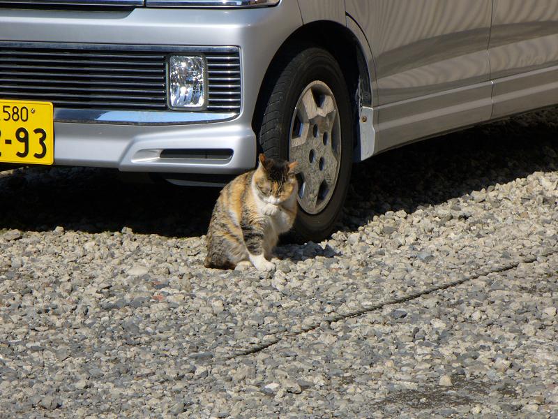 青空駐車場と三毛猫2